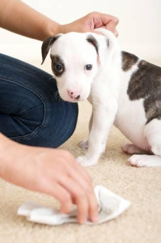 Hund Teppich gekauft